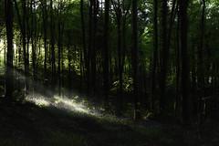 Orange Hill Woods