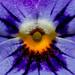 Symmetri / Symmetry Fotosöndag