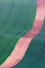 Fields of South Moravia 2
