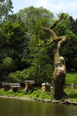 Entenhäuschen unter einem alten Weidebaum_Wildpark Poing_05.05.18