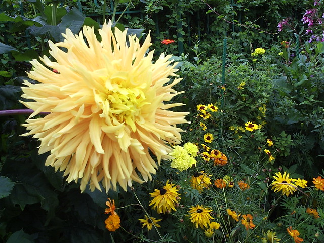 Giverny flowers 4