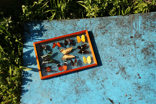 Staged butterflies over industrial blue framed with green nature