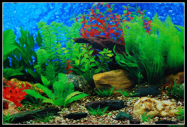 graphic regarding Aquarium Backgrounds Printable named printable aquarium backgrounds totally free - Sinma