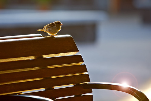 Airport Bench Bird