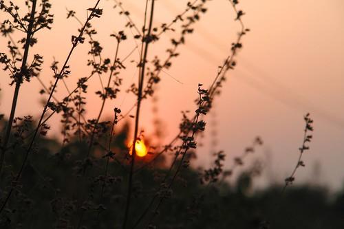 Spot the sun?