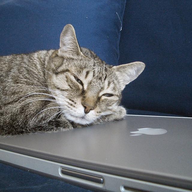 Gila loves my Mac