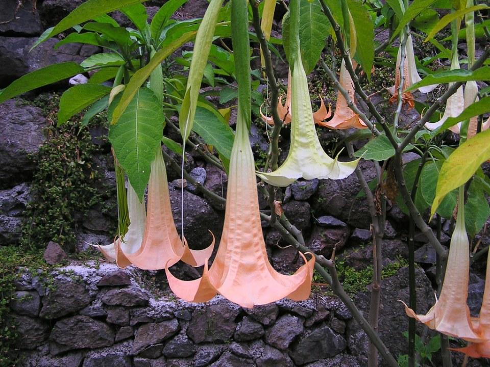 flores Isla de La Gomera 0387
