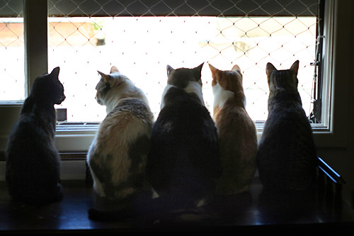 Cat meeting...
