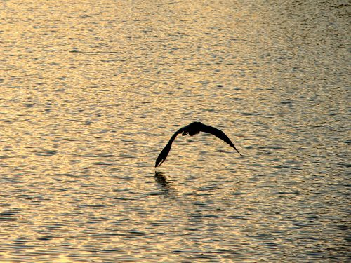 Bird over the surface