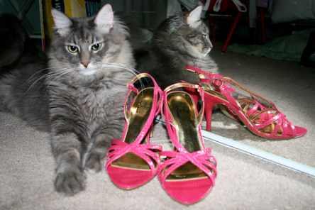 Animal Cruelty Laws Helping Cats - Gray Cat with pink high heels