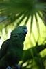 Green parrots, Green Parrot Gatorland