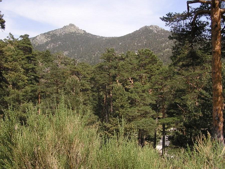 Camino Schmidt Guadarrama Madrid 20