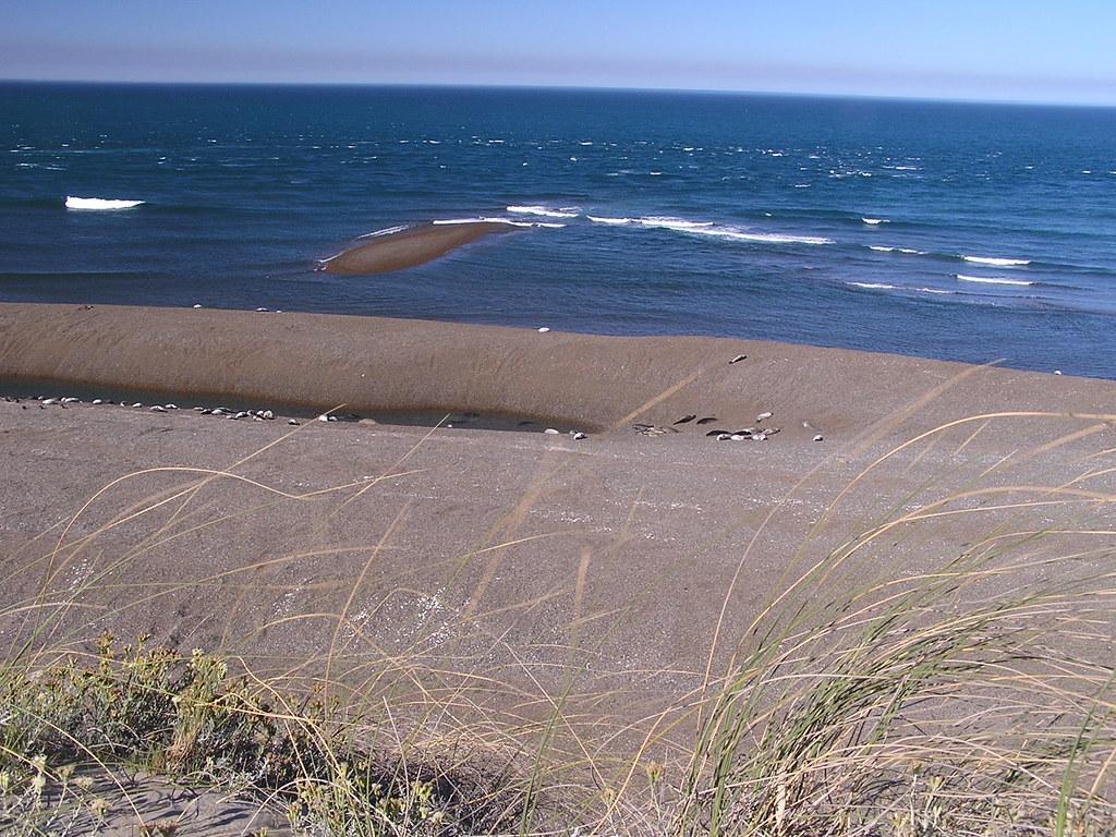 elefantes marinos Lobos Marinos y pinguinos Caleta Valdes Argentina 154