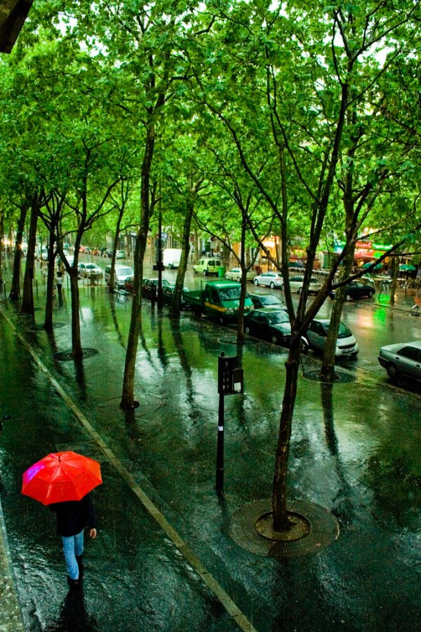 Rain forest in Paris