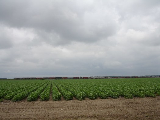 Cotton Rows, Leland MS