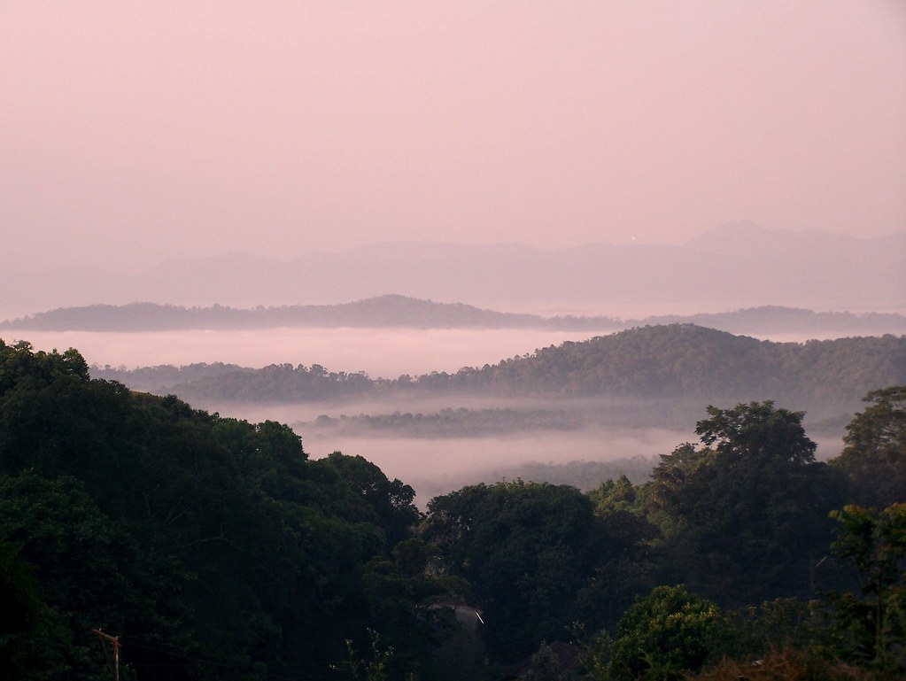 Misty Coorg Morning