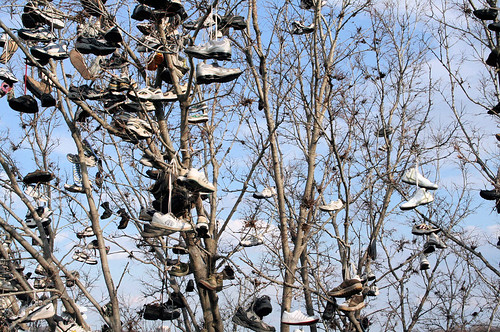 University of Minnesota - shoe tree