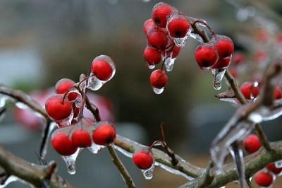 Ice Storm, 12-15-05