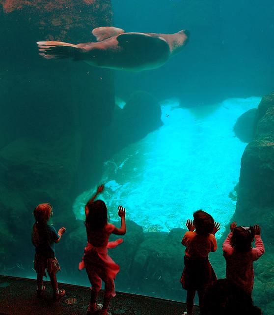 Portland Zoo Tank Flickr Photo Sharing