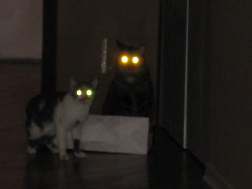 Demon Cats