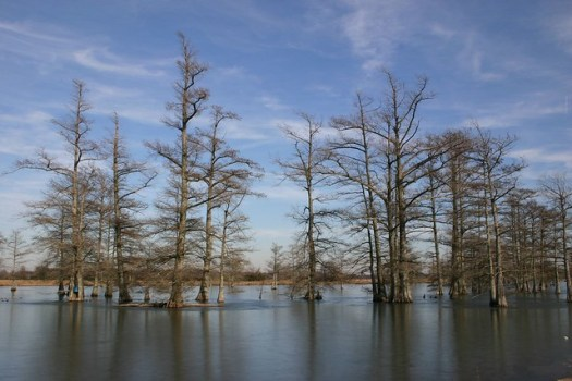Starting to Freeze Over, MS Delta 2004