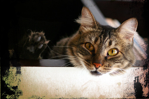 Meet the cat: TOJI