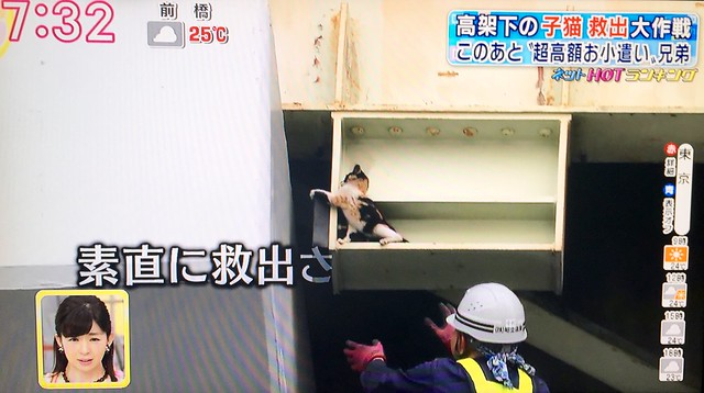 Cat rescue from express highway pillar covered on Japanese television
