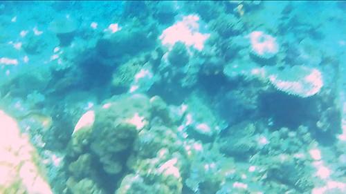 Julay en el mundo submarino del archipiélago Bacuit