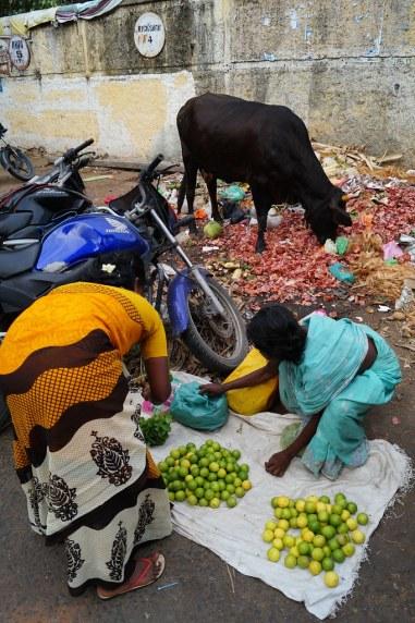 Indien India Pondicherry Puducherry Blog (42)