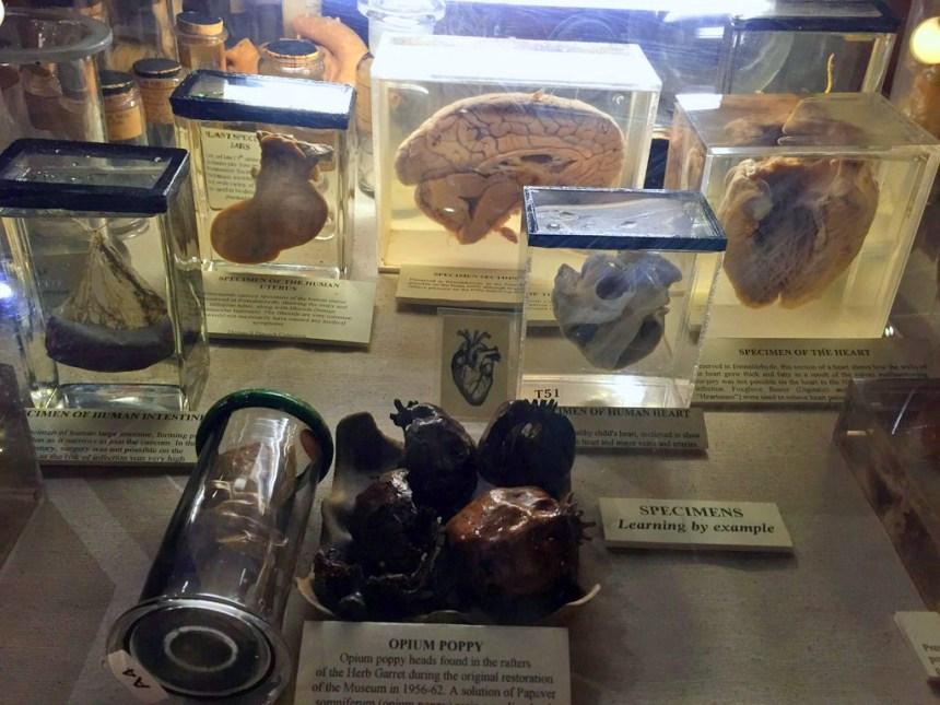 Interior del Herbolario y antiguo quirófano de la Torre de St. Thomas El antiguo quirófano escondido de Londres El antiguo quirófano escondido de Londres 19846178974 a47eeae1ce o