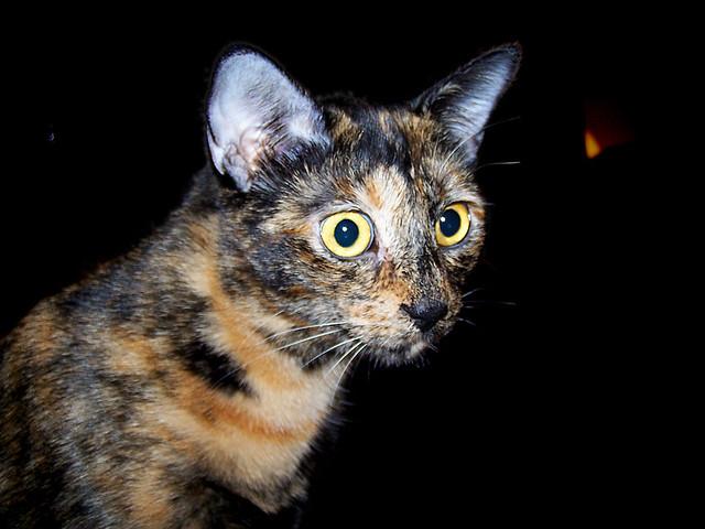"LC (""Little Cat"")"