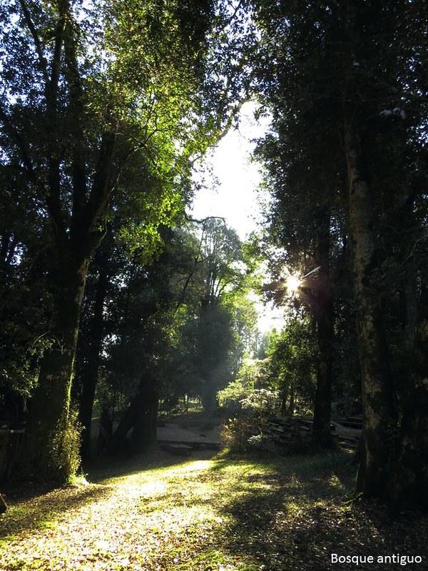 Bosque antiguo