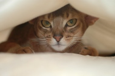 "Stress and Anxiety in Cats ""I was hiding."""