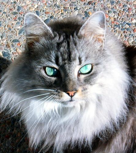 cat poses (1)