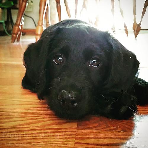 puppyface magoo