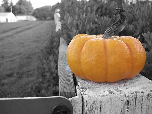pumpkin-post-BW