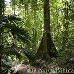 06 Viajefilos en Australia, Eungella NP 017