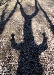 angry hand tree shadow knight thingie