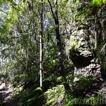 Viajefilos en Australia. Blue Mountains 019