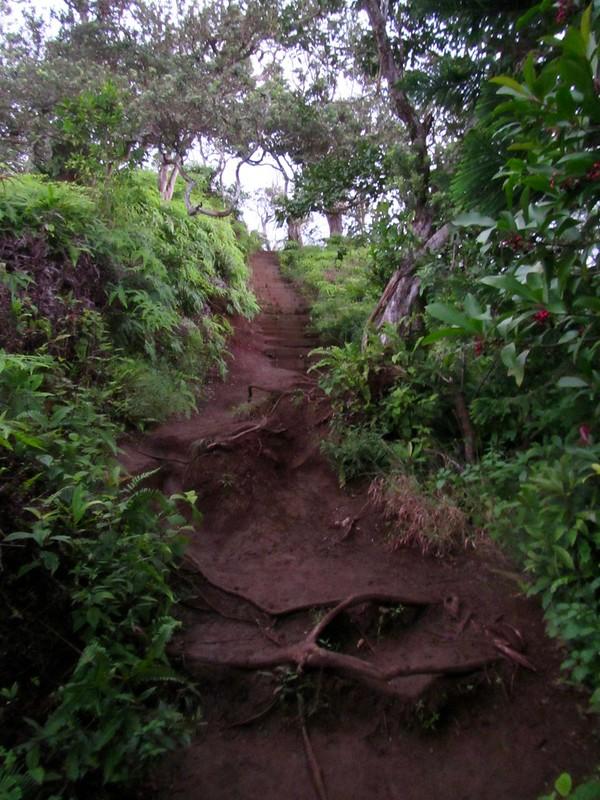 Picture from the Kuli'ou'ou Ridge Trail