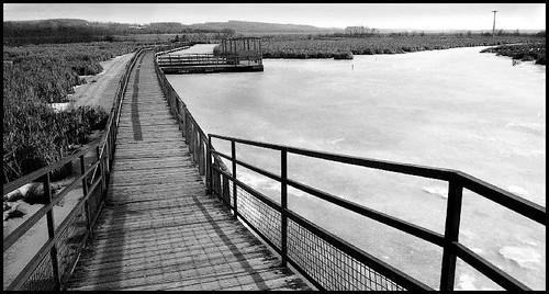 Wye Marsh boardwalk