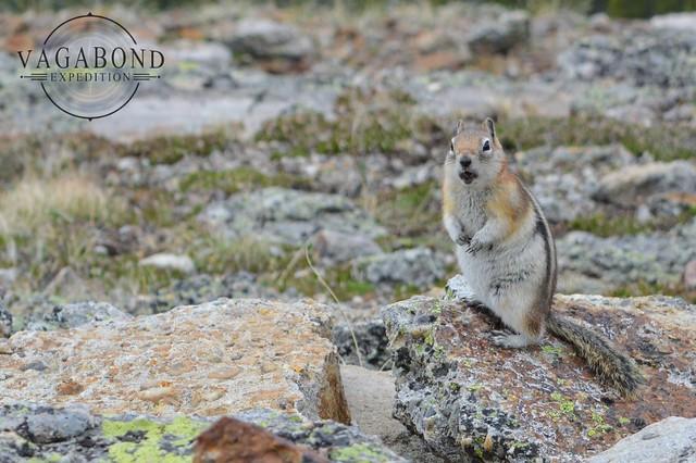 1024 - ve - squirrel DSC_5684