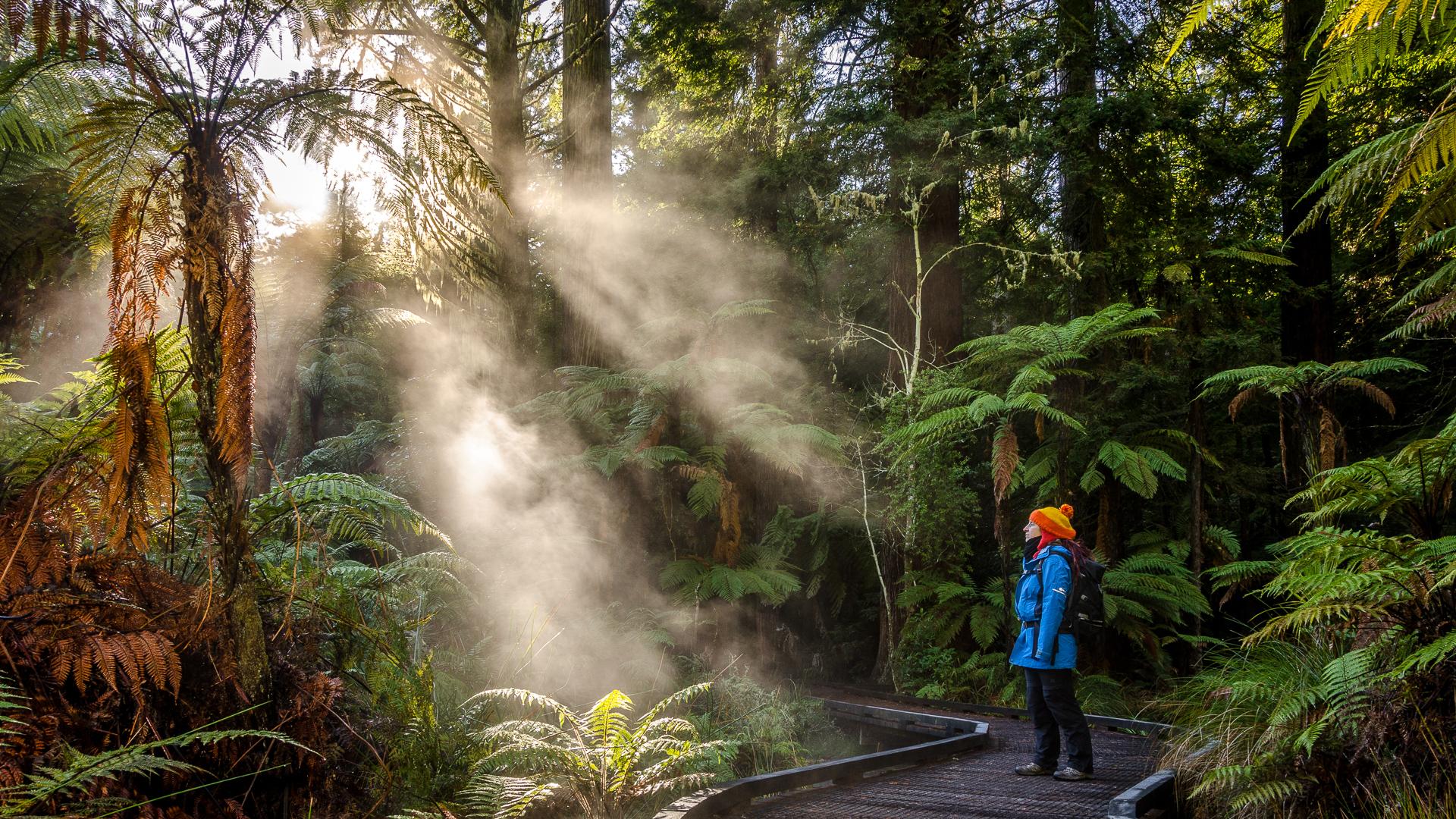 Redwood Forest Morning