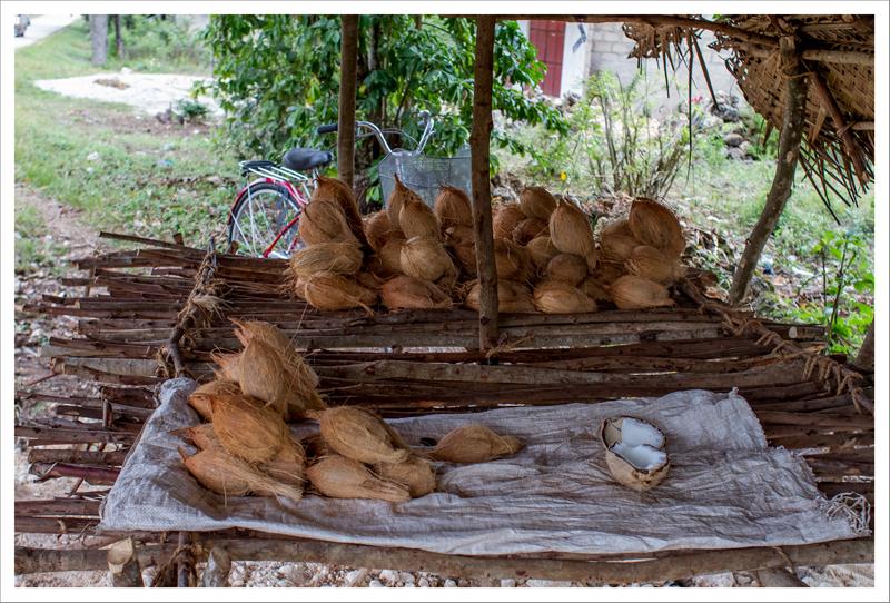 Muchos cocos