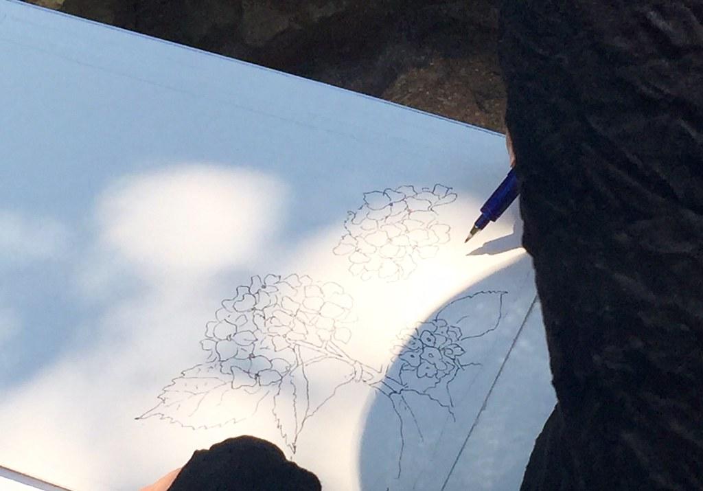 Drawings at Hydrangea festival at Hakusan Shrine