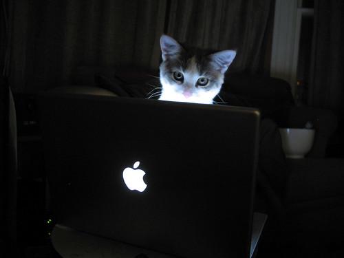 Cat on a Mac