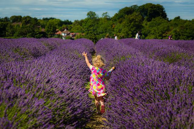 Bella running through the lavender