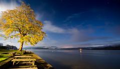 Autumn on #Windermere Lake