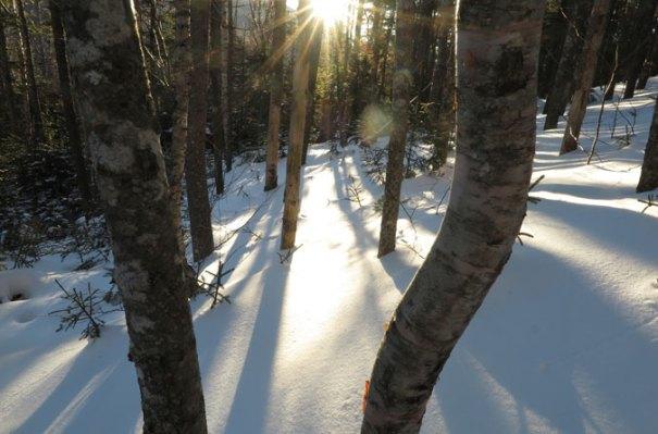 Osceola Trail Sunshine