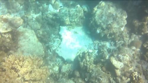 Chamos, corales y hasta una tortuga en el fondo marino del agua del mar